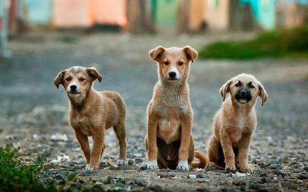 Priante destina recursos para controle da população animal